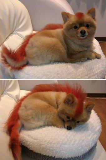 FireFox Dog!